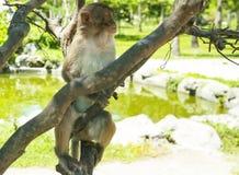 Ein Affe, der auf einem Baum sitzt Klein und süß Stockbild