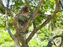 Ein Affe, der auf einem Baum sitzt Klein und süß Stockfotografie