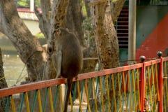 Ein Affe, der auf Eisengrill sitzt Stockfoto