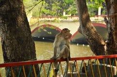 Ein Affe, der auf Eisengrill sitzt Stockfotografie