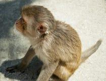 Ein Affe, der aus den Grund sitzt Klein und süß Lizenzfreies Stockfoto