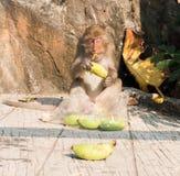 Ein Affe, der Banane isst Stockfotografie