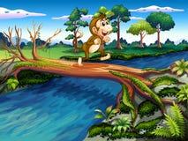 Ein Affe, der den Fluss kreuzt Lizenzfreies Stockfoto