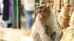 Ein Affe, der Leute sitzt und betrachtet Stockfotos