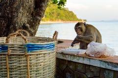 Ein Affe, der nach Lebensmittel im Abfall sucht Lizenzfreie Stockfotos