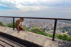 Ein Affe, der an Swayambhunath-Tempel sich entspannt Lizenzfreies Stockbild