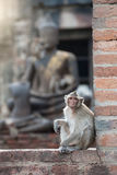 Ein Affe, der vor Buddha-Bild sitzt Lizenzfreie Stockfotos