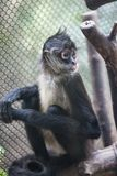 Ein Affe in einem Käfig Lizenzfreie Stockbilder
