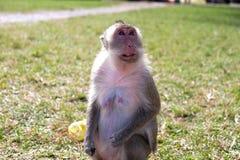 Ein Affe in einem Tempel Stockbild