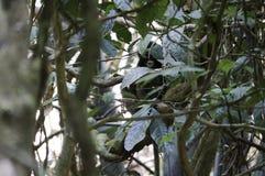 ein Affe familiy im Dschungel Lizenzfreies Stockfoto