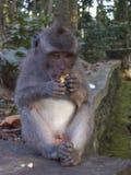 Ein Affe gesessen auf einem Wandessen stockfotografie