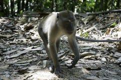 ein Affe im Dschungel in Thailand Stockbilder