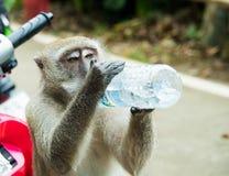 Ein Affe ist Trinkwasser von der Flasche Wasser Lizenzfreie Stockbilder