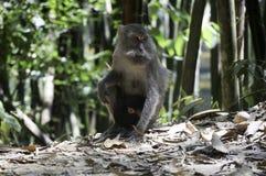 ein Affe mit seinem Baby im Dschungel Stockbilder