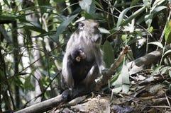 ein Affe mit seinem Baby im Dschungel Stockfotos