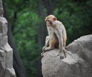Ein Affe in Qingdao, China Lizenzfreie Stockfotografie