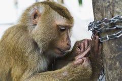 Ein Affe sitzt auf dem Rand Stockfotos
