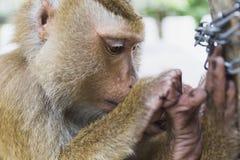 Ein Affe sitzt auf dem Rand Lizenzfreie Stockfotos