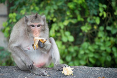 Ein Affe sitzt auf der Straße und isst Banane Stockbild