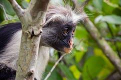 Ein Affe sitzt auf einem Baum Stockfoto