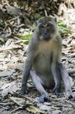 ein Affe sitzt aus den Grund Stockfoto