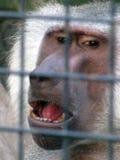 Ein Affe sitzt in einem Zoo Lizenzfreies Stockbild