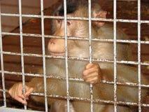 Ein Affe sitzt hinter Gittern Stockbilder