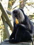 Ein Affe spielt mit einem Baumblatt Stockbild