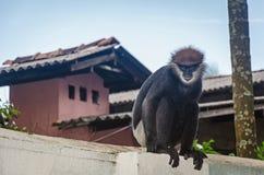 Ein Affe sucht nach etwas Lebensmittel Stockbilder