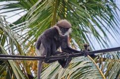 Ein Affe sucht nach etwas Lebensmittel Lizenzfreies Stockbild