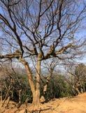 Ein Affebaum Stockbilder