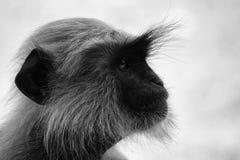 Ein Affeporträt im Wald lizenzfreie stockfotos