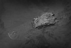 Ein Alligator tränkt oben die Sonne lizenzfreies stockfoto