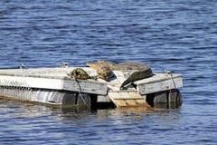 Ein Alligator und zwei Schildkröten auf einem Floss Stockfoto