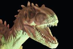 Ein Allosaurus-Dinosaurier gegen einen schwarzen Hintergrund Stockfoto