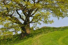 Ein alter Baum Stockfotos