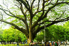 Ein alter Baum, Bangladesch Stockbilder