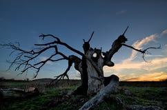 Der gruselige Baum Stockfoto