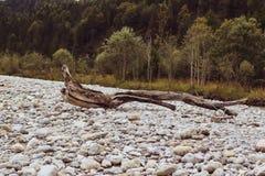 Ein alter Baum wird gelegen lizenzfreie stockfotografie