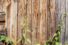 Ein alter Baum Zaun und Anlagen Konzepthintergrund und -beschaffenheit Lizenzfreie Stockbilder