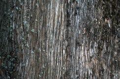 Ein alter Baumstamm als natürlicher Hintergrund Lizenzfreies Stockfoto