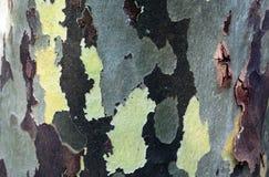 Ein alter Baumstamm als natürlicher Hintergrund Stockfotografie