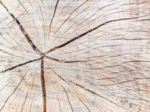 Ein alter Baumstumpf zeigt Sprünge Lizenzfreie Stockbilder
