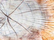 Ein alter Baumstumpf zeigt Sprünge Stockfotos
