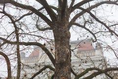 Ein alter bloßer Baum vor einem Altbau auf einem nebeligen November-Morgen Stockfotos