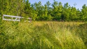 Ein alter Gartenbereich voll von ?berwucherten Unkr?utern und von Gras stockbild