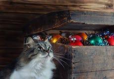 Ein alter Kasten mit Weihnachtsdekorationen und einer Katze Stockfotografie