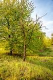 Ein alter verwelkter Baum Lizenzfreie Stockbilder