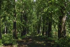 Ein alter Weg in den Bäumen Gasse Lizenzfreie Stockfotos