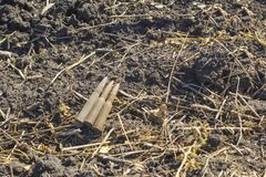 Ein alter Zahn gefunden während der Aushöhlungen mit einem Metalldetektor lizenzfreies stockfoto